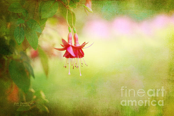 Bloom Photograph - Seeking The Light by Beve Brown-Clark Photography