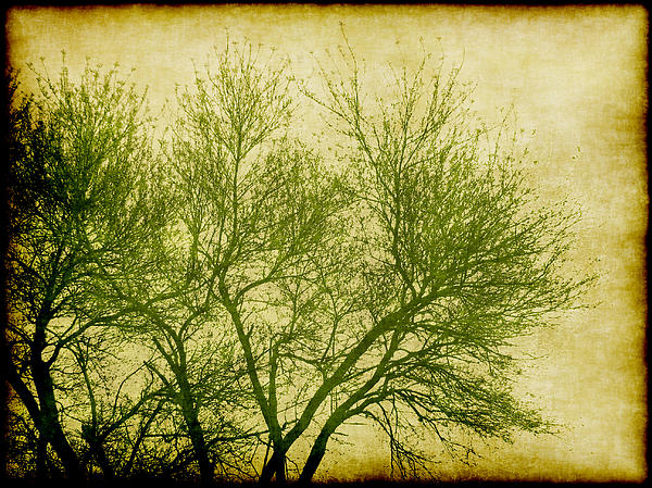Tree Digital Art - Serene Green 2 by Wendy J St Christopher
