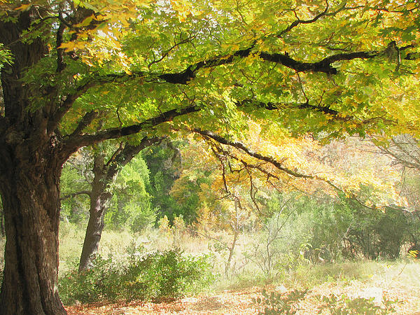 Lost Maples Digital Art - Serenity by Wendy J St Christopher