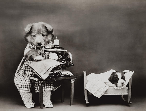 Dog Photograph - Sewing Baby Clothes by Aged Pixel