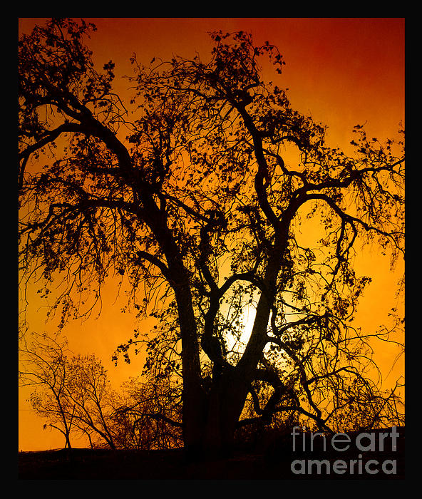 Tree Photograph - Shadowlands 11 by Bedros Awak