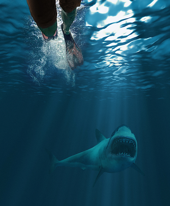 Shark Attack Photograph by MediaProduction