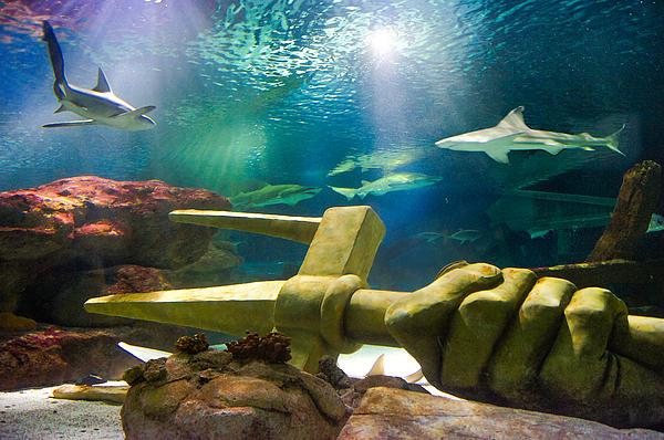 Sea Life Minnesota Aquarium Photograph - Shark Tank Trident by Bill Pevlor