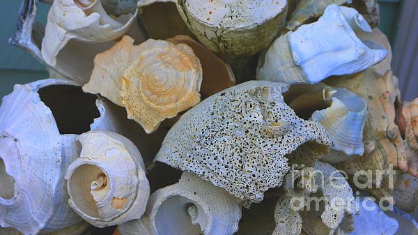 Shells Photograph - Shell by Nancie DeMellia