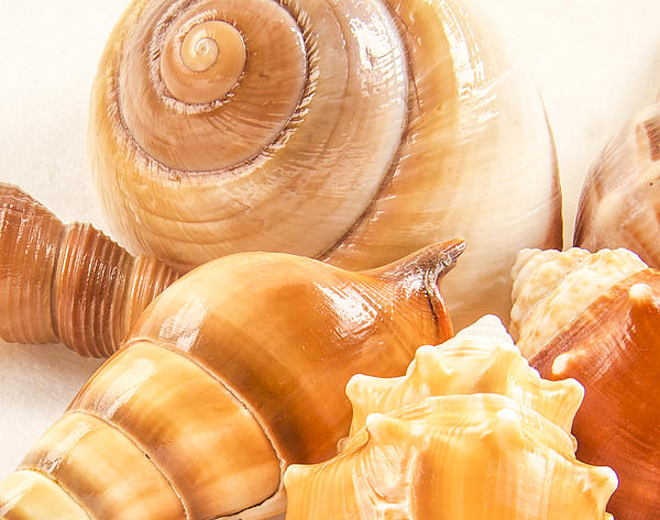Shell Photograph - Shells by Jean Noren
