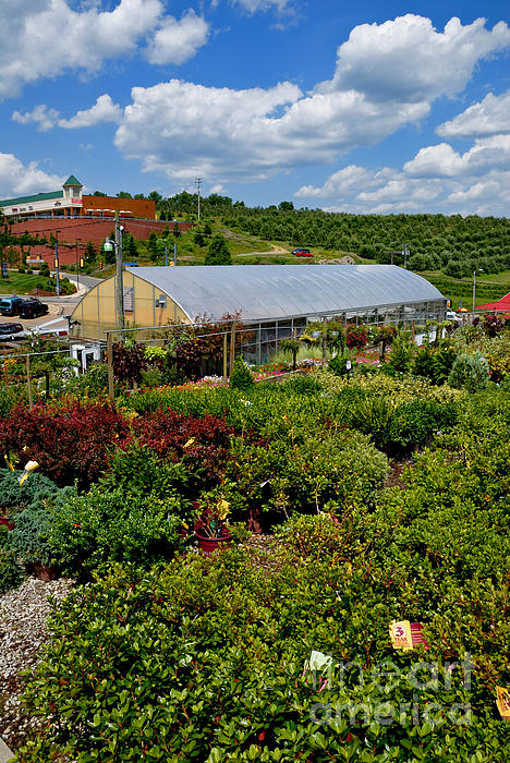 Allegheny County Photograph - Shrubbery At A Greenhouse by Amy Cicconi