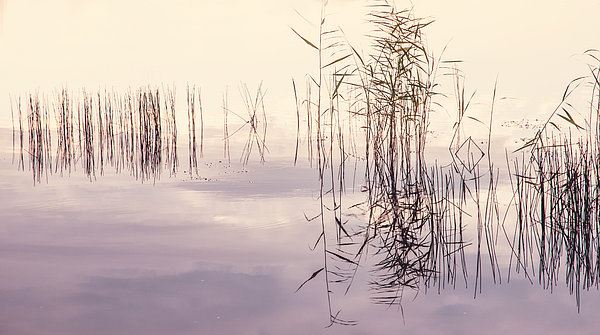 Nature Photograph - Silent Rhapsody. Sacred Music by Jenny Rainbow