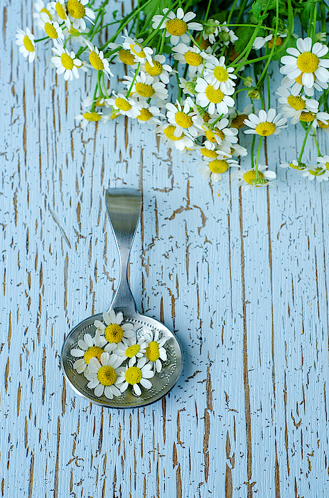 Silver Spoon With Chamomile Flowers Photograph by Natalia Ganelin