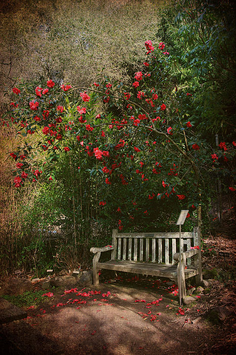 Uc Berkeley Botanical Garden Photograph - Sit With Me Here by Laurie Search