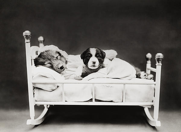 Dog Photograph - Sleep Over by Aged Pixel