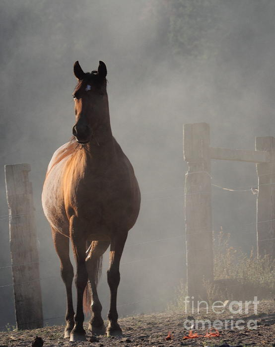 Horses Photograph - Smoke by Rod Giffels