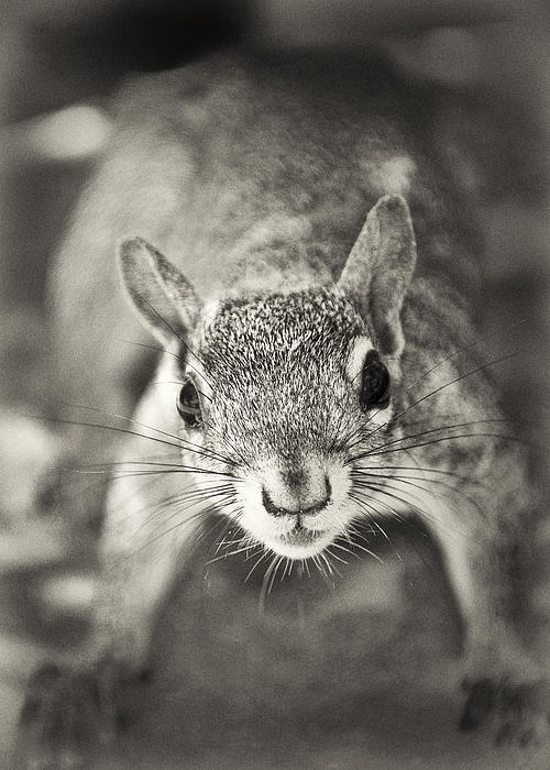 Squirrel Photograph - Snack Time by Patrick M Lynch