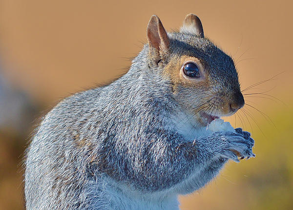 Animals Photograph - Snack Time by Thomas  MacPherson Jr