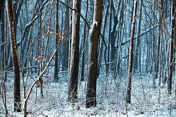 Dusk Photograph - Snow At Dusk by Tim Michael