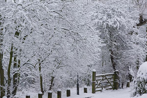 Snow Photograph - Snow Canopy by David Birchall