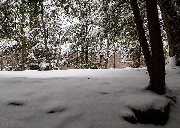 Snow Photograph - Snow In Shade  by Tim Fitzwater