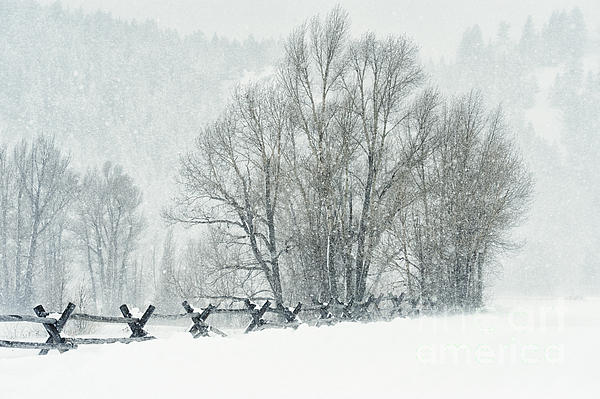 Grand Teton Photograph - Snowy Day In The Tetons by Sandra Bronstein