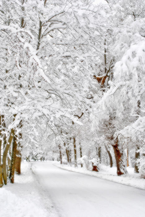 Snow Scene Photograph - Snowy Path by Emily Stauring
