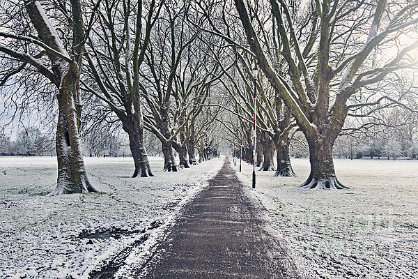 Cambridge Photograph - Snowy Path Through Jesus Green In Cambridge Uk by Justin Paget