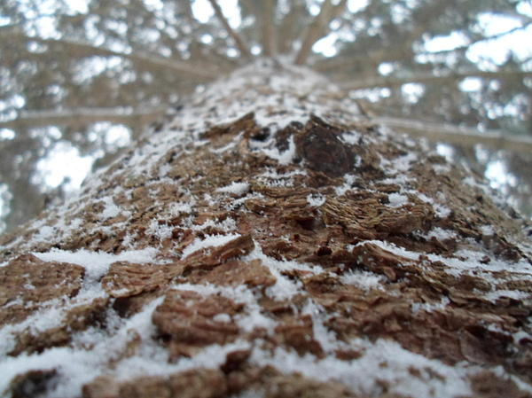 Snow Photograph - Snowy Tree by Jenna Mengersen