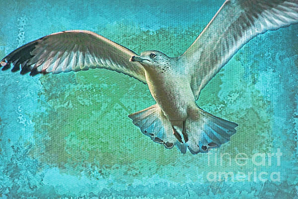 Seagull Photograph - Soaring On Lifes Air Drafts by Deborah Benoit