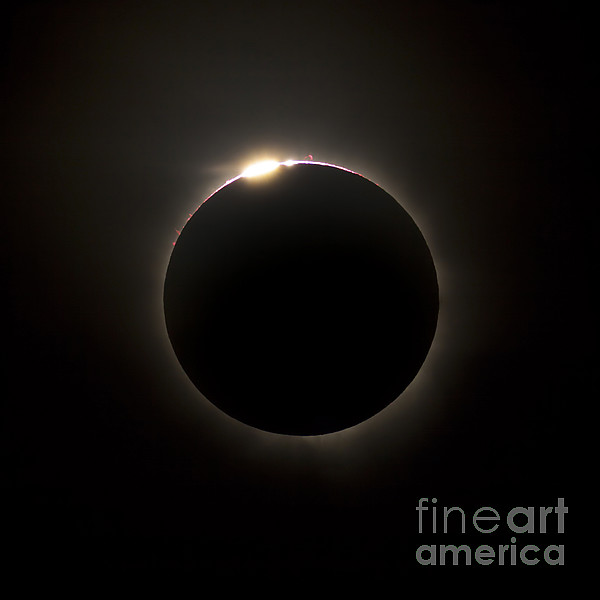 Eclipse Photograph - Solar Eclipse With Prominences by Philip Hart