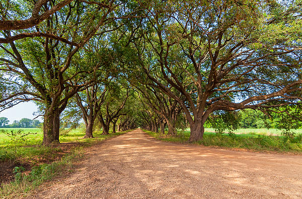 Oak Alley Photograph - Southern Journey by Steve Harrington