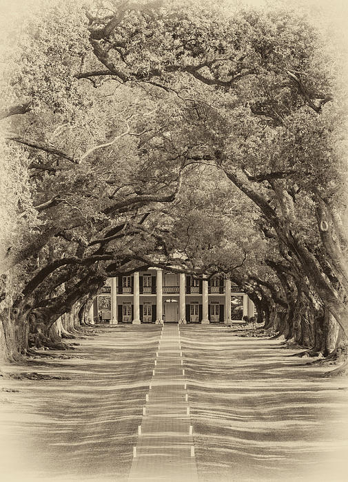 Oak Alley Plantation Photograph - Southern Time Travel Sepia by Steve Harrington
