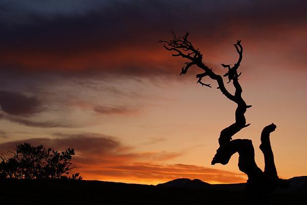 Landscape Photograph - Southwest Tree Sunset by Michael J Bauer