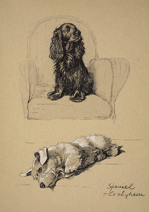 Dog Drawing - Spaniel And Sealyham, 1930 by Cecil Charles Windsor Aldin