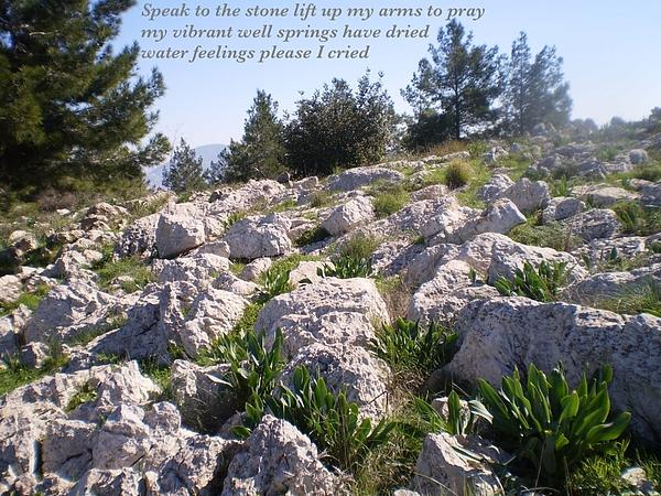 Israel Photograph - Speak To The Stone by Chaya Rosen