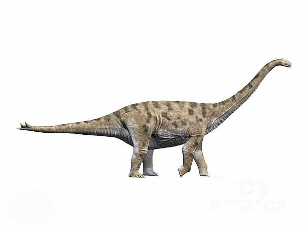 Side View Digital Art - Spinophorosaurus Nigerensis, Middle by Nobumichi Tamura