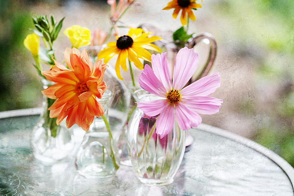 Spring Flowers Photograph - Spring Delights by Bonnie Bruno