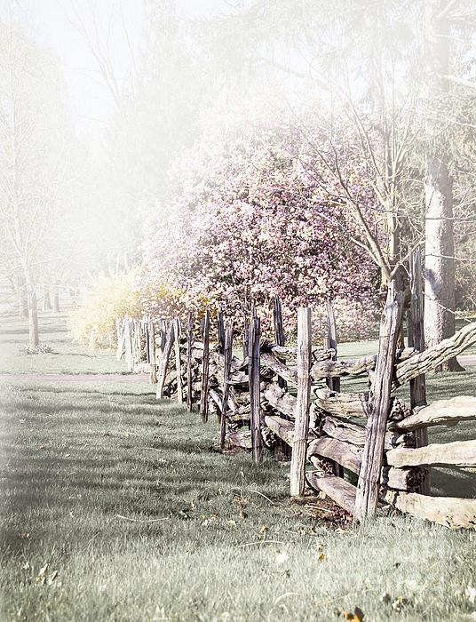 Landscape Photograph - Spring Landscape With Fence by Elena Elisseeva