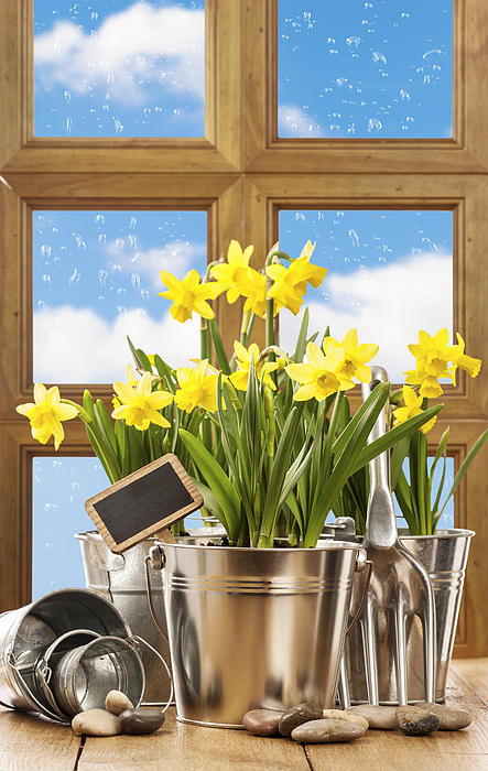Spring Photograph - Spring Window by Amanda Elwell