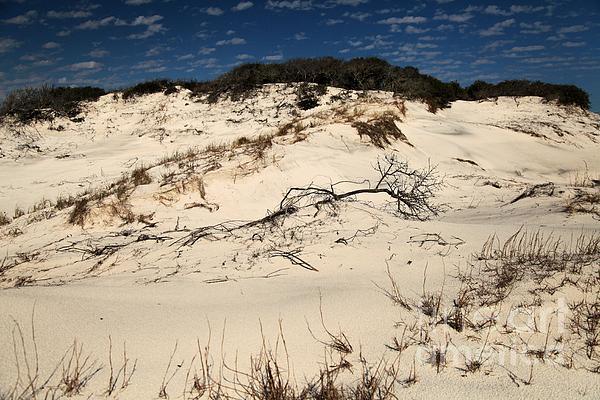 St Joseph Peninsula State Park Photograph - St. Joseph Sand Dunes by Adam Jewell