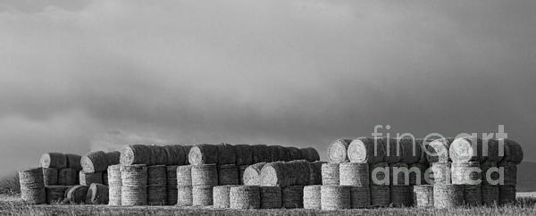 Hay Photograph - Stacked Round Hay Bales Bw Panorama by James BO  Insogna