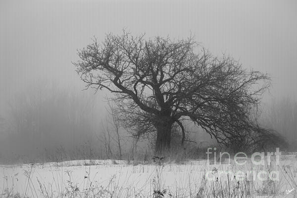 Maine Fine Art Photography Photograph - Standing Alone by Alana Ranney