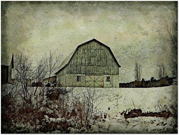 Barn Farm Pasture Field Winter Snow Textures Tones  Photograph - Standing Proud  by Dianne  Lacourciere