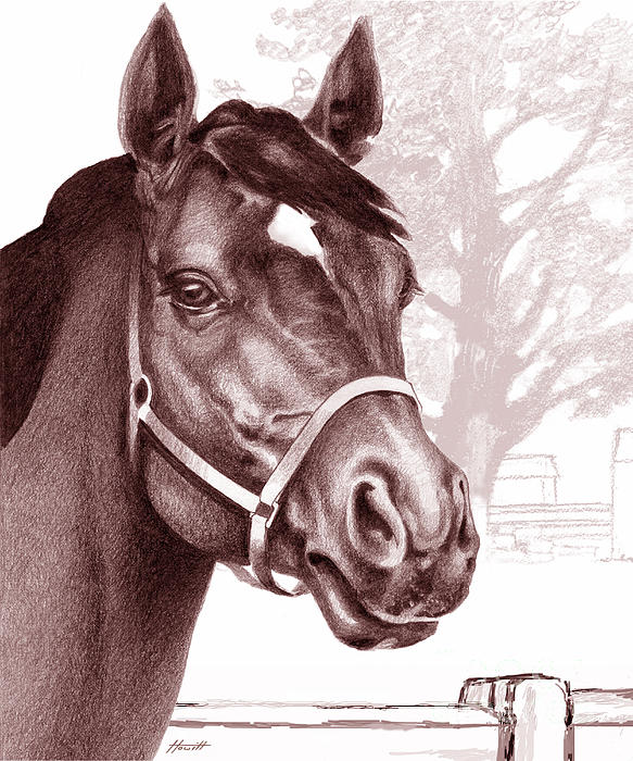 Horse Drawing - Stare Of The Stallion by Patricia Howitt