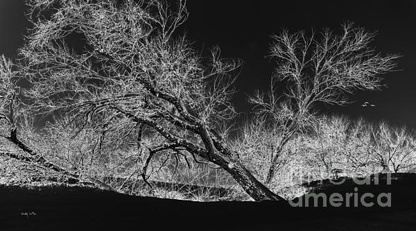 Snow Photograph - Starkly by Betty LaRue