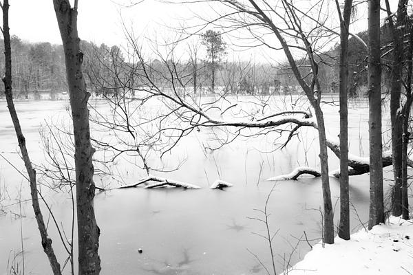Snow Photograph - Stuck In The Middle With You by Regina  Williams