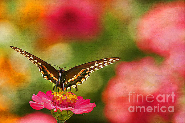 Animal Photograph - Summer Grace by Darren Fisher