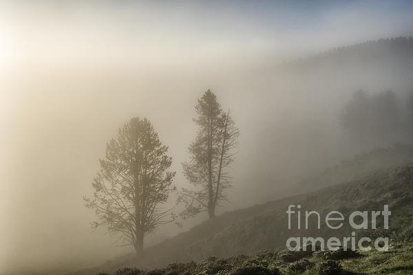 Yellowstone Photograph - Summer Morning In Yellowstone by Sandra Bronstein