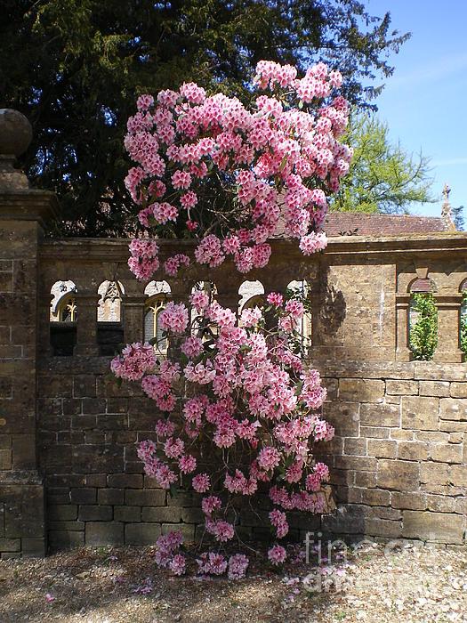 Pink Flowers Photograph - Summer Time by Ann Fellows