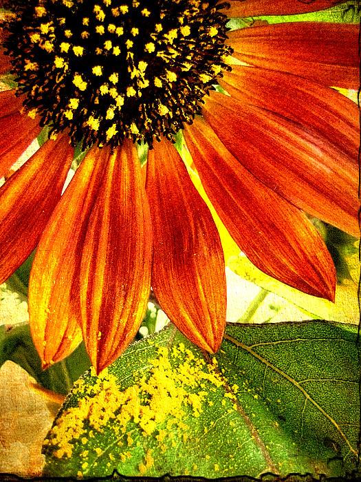 Sunflowerflower Photograph - Sunflower Memories by Kathy Bassett