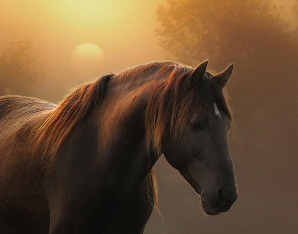 Equine Photograph - Sunrise On Planet Earth by Ron  McGinnis