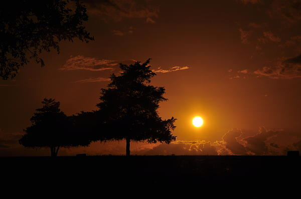 Sunset Photograph - Sunset And Trees by Cherie Haines