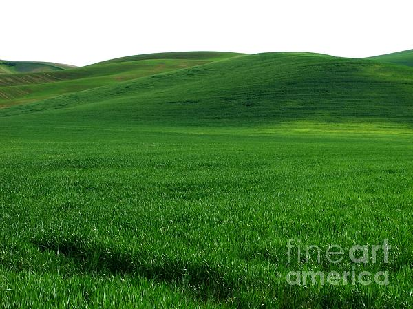 Super  Photograph - Super Greens Land by Boon Mee