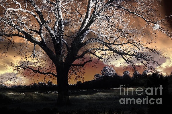 Surreal Nature Photos Photograph - Surreal Fantasy Gothic Trees Nature Sunset by Kathy Fornal
